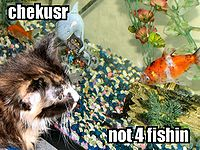 Catfishing.jpg