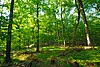 Cedarburg Beech Woods.jpg