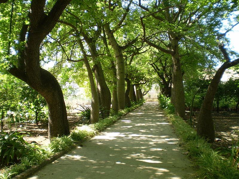 File:Ceiba speciosa - Orto Botanico di Palermo 05.jpg