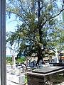 Cementerio Viejo de Camuy, Puerto Rico - panoramio (1).jpg