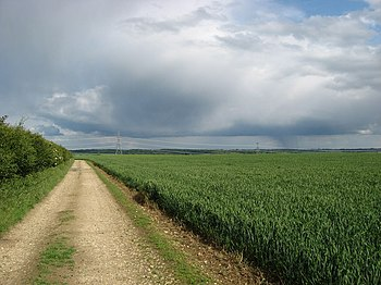 English: Cereal crops near Wendens Ambo Views ...