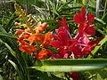 Chiang Mai Orchids P1110349.JPG