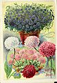 Childs' rare flowers, vegetables, and fruits (1909) (19984630674).jpg