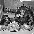 Chimpansees Hilda en Tilly uit Artis, Bestanddeelnr 917-2811.jpg