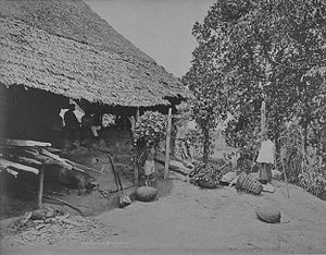 Kangchu system - Chinese workers in a gambier and pepper plantation in Singapore, circa 1900.