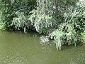 Chiornaya rechka (The Black river) - panoramio.jpg