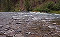 Clackamas Wild and Scenic River (27727567020).jpg