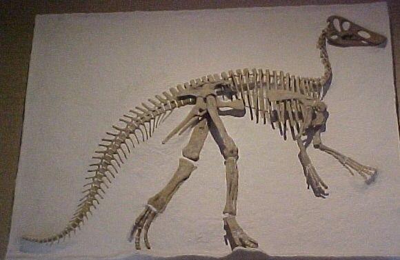 Claosaurus yale