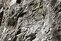 Climbing (5845553072).jpg