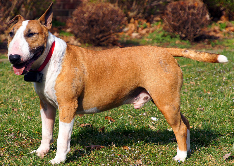 Alpha Dog Training Plymouth