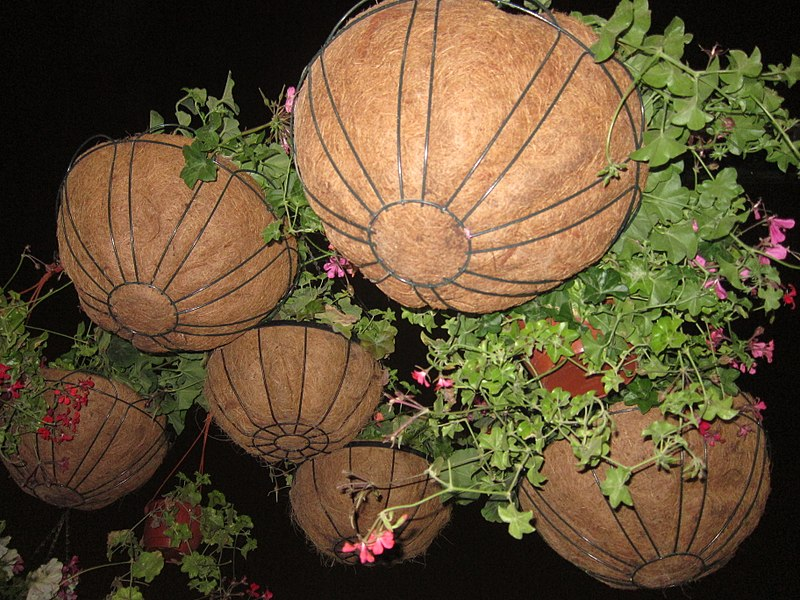 File:Coir Basket for Garden Plants 03.jpg