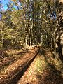 Coldwater River nature trails 7.jpg