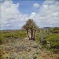 Collectie Nationaal Museum van Wereldculturen TM-20029704 Zoetwaterbron met palmen en cactussen in Bolivia Bonaire Boy Lawson (Fotograaf).jpg