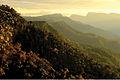 Cordillera Azul National Park - ZooKeys-277-069-g005.jpg