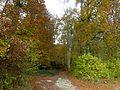 Cossonay-L'Isle - Bois du Sépey 24.jpg