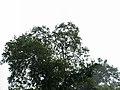 CostaRica (6108261577).jpg