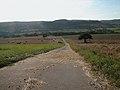Country-lane.jpg