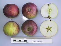 Cross section of Early McIntosh, National Fruit Collection (acc. 1929-042).jpg