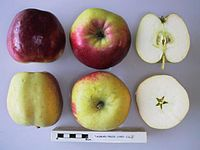Cross section of Tasman Pride, National Fruit Collection (acc. 1952-036).jpg