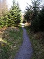 Cycle Trail in Dalbeattie Forest - geograph.org.uk - 392740.jpg