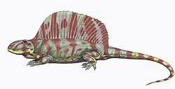 meaning of dimetrodon