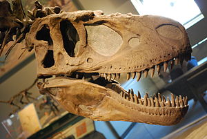 Headshot of the Daspletosaurus mount at the Fi...