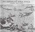 De Bry Madagascar whaling 1598.png