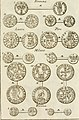 Delle monete e dell'instituzione delle zecche d'Italia, dell'antico e presente sistema di esse- e del loro intrinseco valore, e rapporto con la presente moneta dalla decadenza dell'impero sino al (14783649505).jpg
