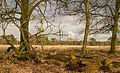 Delleboersterheide – Catspoele Natuurgebied van It Fryske Gea. Omgeving van het heideveld 033.jpg