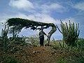 Desert arikok - panoramio.jpg