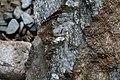 Details eines Steins bei Sibiel.JPG