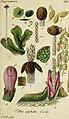 Deutschlands flora in abbildungen nach der natur (1832) (20268471403).jpg