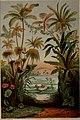 Die Pflanzendecke der Erde - populäre Darstellung der Pflanzengeographie für gebildete Naturfreunde (1859) (20912728886).jpg