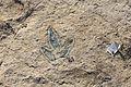 Dinosaur tracks in Courtedoux, Switzerland 02.jpg