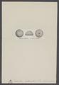 Discoidea - Print - Iconographia Zoologica - Special Collections University of Amsterdam - UBAINV0274 007 02 0027.tif