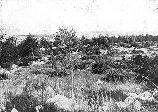 Doberdobska planota (1).jpg