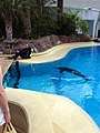 Dolphins (7980885340).jpg