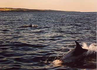 Portlethen - White-beaked dolphins south east of Old Portlethen. Whale and dolphin watching is a popular attraction in summer.