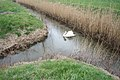 """Drain """"T"""" junction with swan - geograph.org.uk - 749012.jpg"""