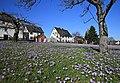 Drebacher Krokuswiesen..2H1A0527WI.jpg