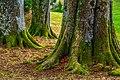 Drei Bäume (139426131).jpeg
