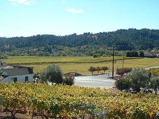 Sonoma County wine
