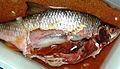 Ductus pneumaticus.jpg