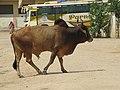 Dwaraka and around - during Dwaraka DWARASPDB 2015 (157).jpg