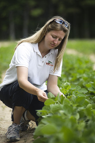 Virginia Tech College of Agriculture and Life Sciences - Meredith Cassell, a Ph.D. student in the Department of Entomology at Virginia Tech, collects bean leaf beetles at a soybean field at the Eastern Shore Agricultural Research and Extension Center in Painter, Va. Cassell discovered that beetles carrying bean pod mottle virus, previously unknown to exist in the area, have infected soybean fields throughout the region.