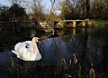Eastleach Swan Stone Footbridge.jpg