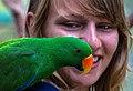 Eclectus Parrot at Kuranda-01 (8231372126).jpg