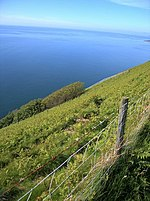 File:Edge of the headland on the Cardigan Bay coast - geograph.org.uk - 182081.jpg