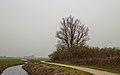 Eenzame wilg (Salix) aan fietspad om Langweerderwielen (Langwarder Wielen). Oostkant 04.jpg