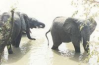 Elefanten Mole National Park.jpg